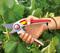 Секатор профессиональный WOLF-Garten RR 5000_GardenGift